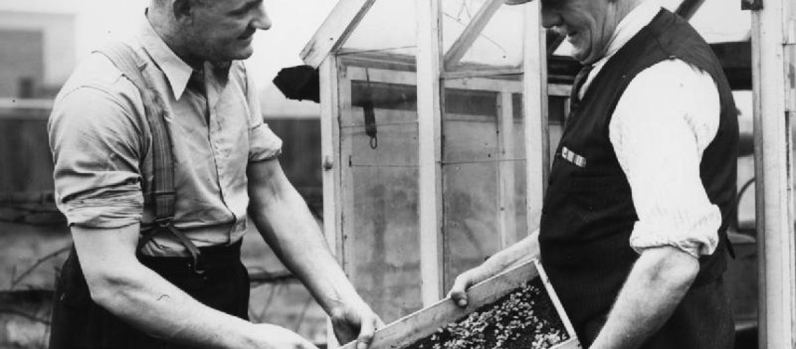 Dig_For_Victory-_Life_on_a_Wartime_Allotment,_Acton,_Middlesex,_England,_1940_D482